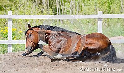 Schacht Stallion rollt im Sand