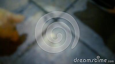 Schauen Sie sich den Boden unscharf an stock video