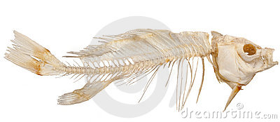 Scheletro dei pesci