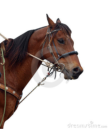 Schließen Sie oben vom Pony eines Cowboys, welches die Heftzwecke zeigt