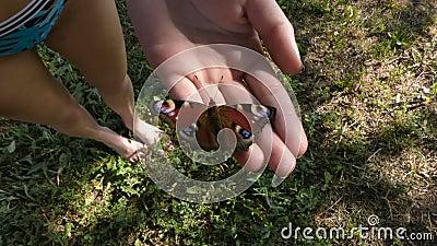 Schmetterling sitzt auf dem Arm des Mädchens stock video footage