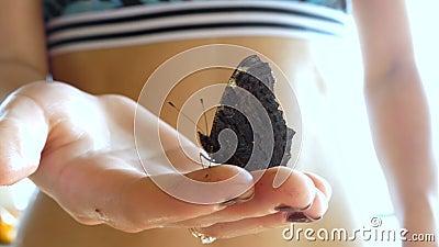 Schmetterling sitzt auf dem Arm des Mädchens stock footage