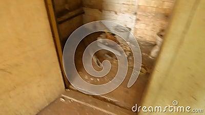 Schmutziges Badezimmer, Ungewaschene Toilette Stock Footage - Video ...