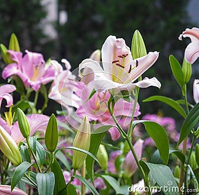 Schöne Blumen Auf Dem Garten Im Freien Stockfoto - Bild: 53015372