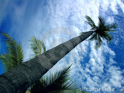Schöne Palme gegen den blauen Himmel