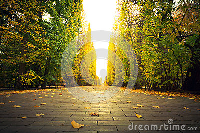 Schöne Parkgasse im Herbst
