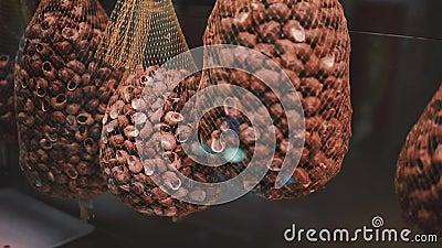 Schnecken in den Wannen werden in den großen Netzen verpackt und hängen in einem Nahrungsmittelmarkt, Nahaufnahme stock video