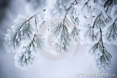 Schnee abgedeckte Blätter im Winter