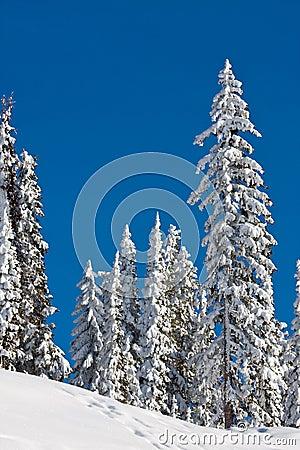 Schnee deckte Bäume ab