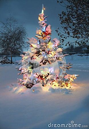 schnee deckte weihnachtsbaum ab stockbild bild 1491261. Black Bedroom Furniture Sets. Home Design Ideas