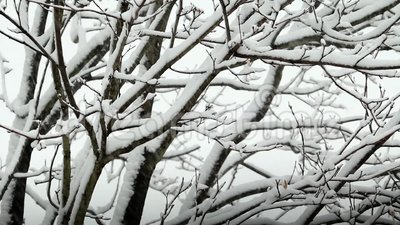 Schnee, der auf Baum ausfällt stock video footage