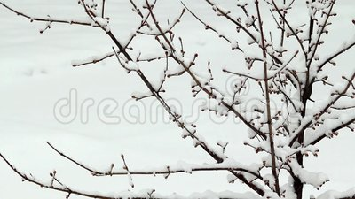 Schnee, der auf Baum ausfällt stock video