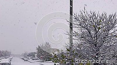 Schneefall im Winter 6260 stock video
