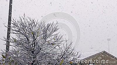 Schneefall im Winter stark rückläufig stock footage