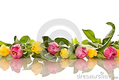 sch ner blumenstrau der tulpen lizenzfreie stockbilder bild 30429669. Black Bedroom Furniture Sets. Home Design Ideas