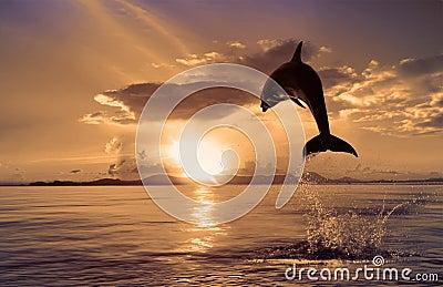 Schöner Delphin, der von glänzendem Wasser springt