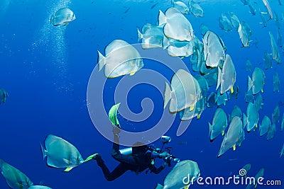 School of batfish and photographer