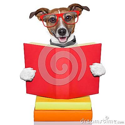 Free School Learing Dog Stock Photo - 30747190