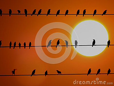 School of Sunset Birds