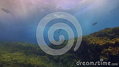 School voor zilvervissen in mooie zonnestralen, dramatisch golven en blauw zonneoppervlak stock videobeelden