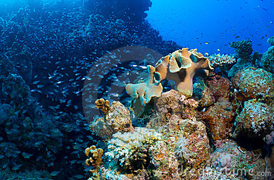 Schooling fish and corals
