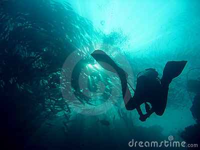 Schooling fish scuba diver sipadan island borneo