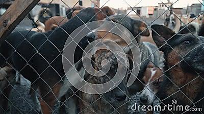 Schronisko dla psów brud i psy bagienne za płotem głodne szczeniaki zdjęcie wideo