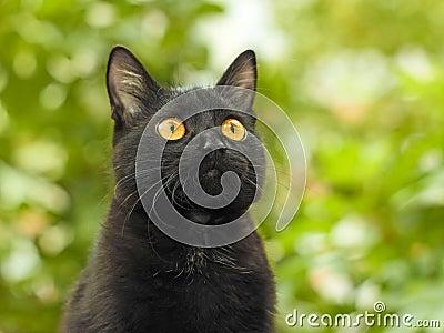 Schwarze Katze auf grünem Laubhintergrund