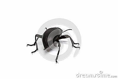 schwarzer k fer lizenzfreie stockbilder bild 15158509. Black Bedroom Furniture Sets. Home Design Ideas
