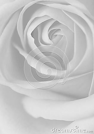 schwarzweiss rosen lizenzfreie stockfotografie bild 8885577. Black Bedroom Furniture Sets. Home Design Ideas