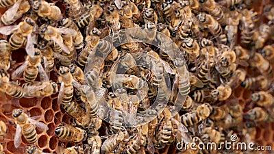 Sciame di api Alveari nell'apiario, intelaiature con miele video d archivio