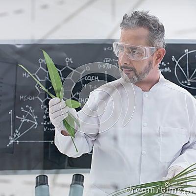 Scientist analyzing leafs