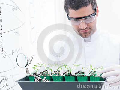Scientist analyzing seedlings