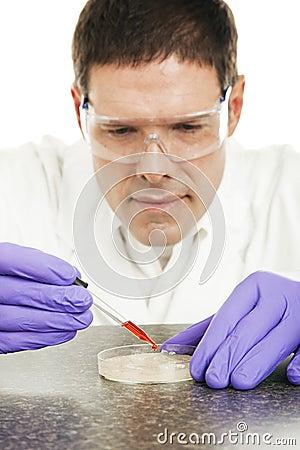 Scientist Grows Culture in Petri Dish