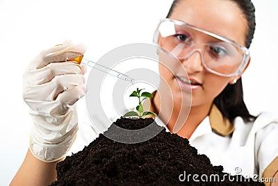 Scientist pouring liquid on plant