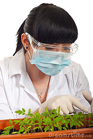 Scientist woman examine new tomatoes leafs