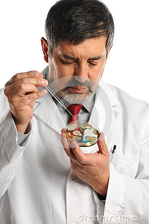 Scientist Working with Bacteria On Petri Dish