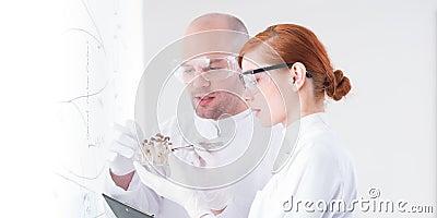 Scientists analyzing mushrooms