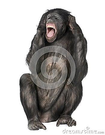 Scimmia pazzesca che grida
