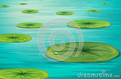 Scène calme d étang