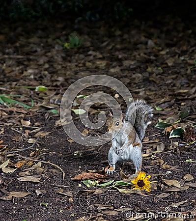 scoiattolo con fiore