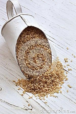 Scoop of Brown Rice