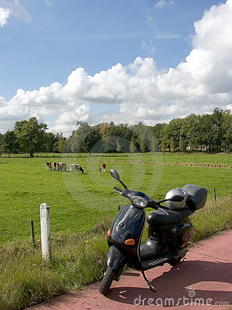 Scootering, cows in meadow.