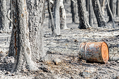 Scorched earth and trees