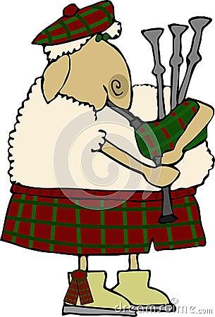 Scotch Sheep