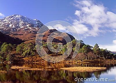 Scots pines(Pinus sylvestris) loch Clair,Scotland