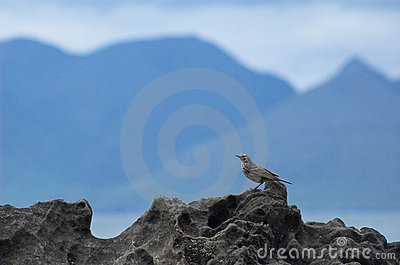 Scottish Island Mountain Silhouette, with Songbird on Rock