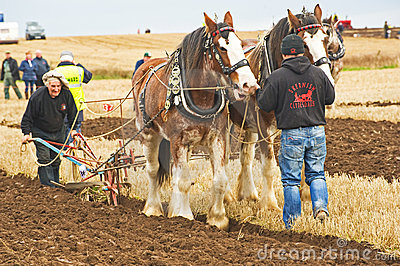 Scottish National Ploughing Championship. Editorial Image