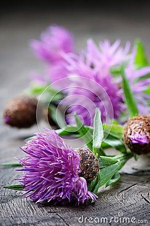Free Scottish Thistle Flower Stock Images - 25959904