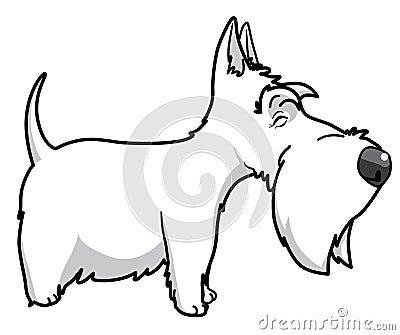 Scottisth terrier
